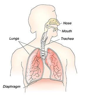 Where the diaphragm is